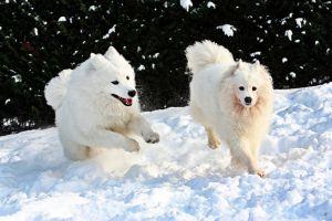 Уход за лапами собаки зимой.