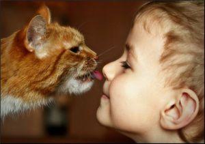 Что нужно знать о вакцинации домашних животных   Первая