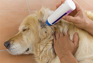 Какие выбрать капли от клещей для собак